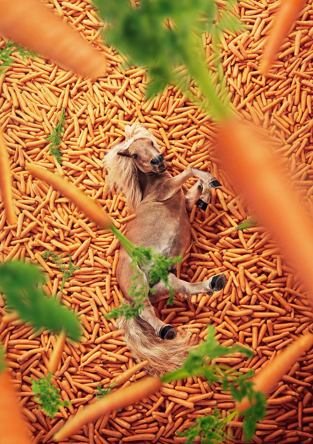 Alexander crispin atg vinnie carrots americanbeaty