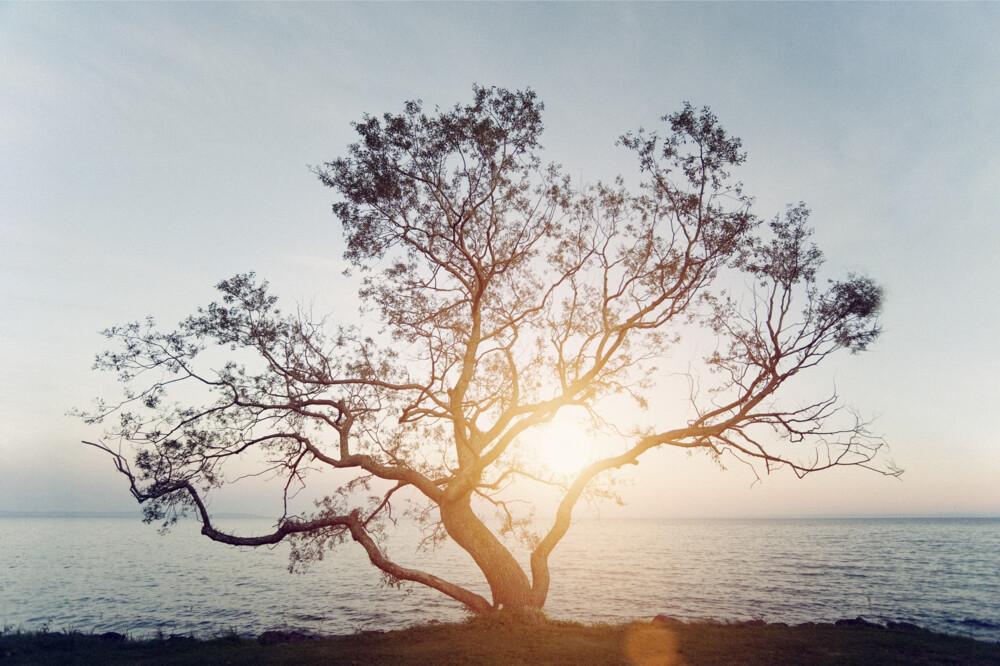 Tree2 (1)