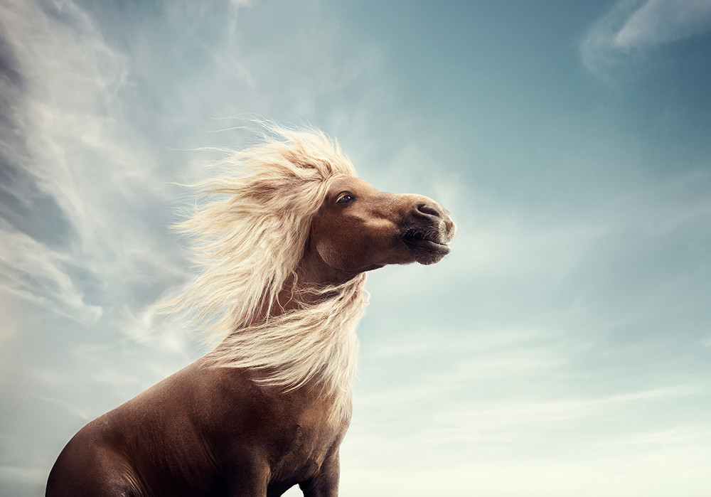 Alexander crispin atg vinnie horse