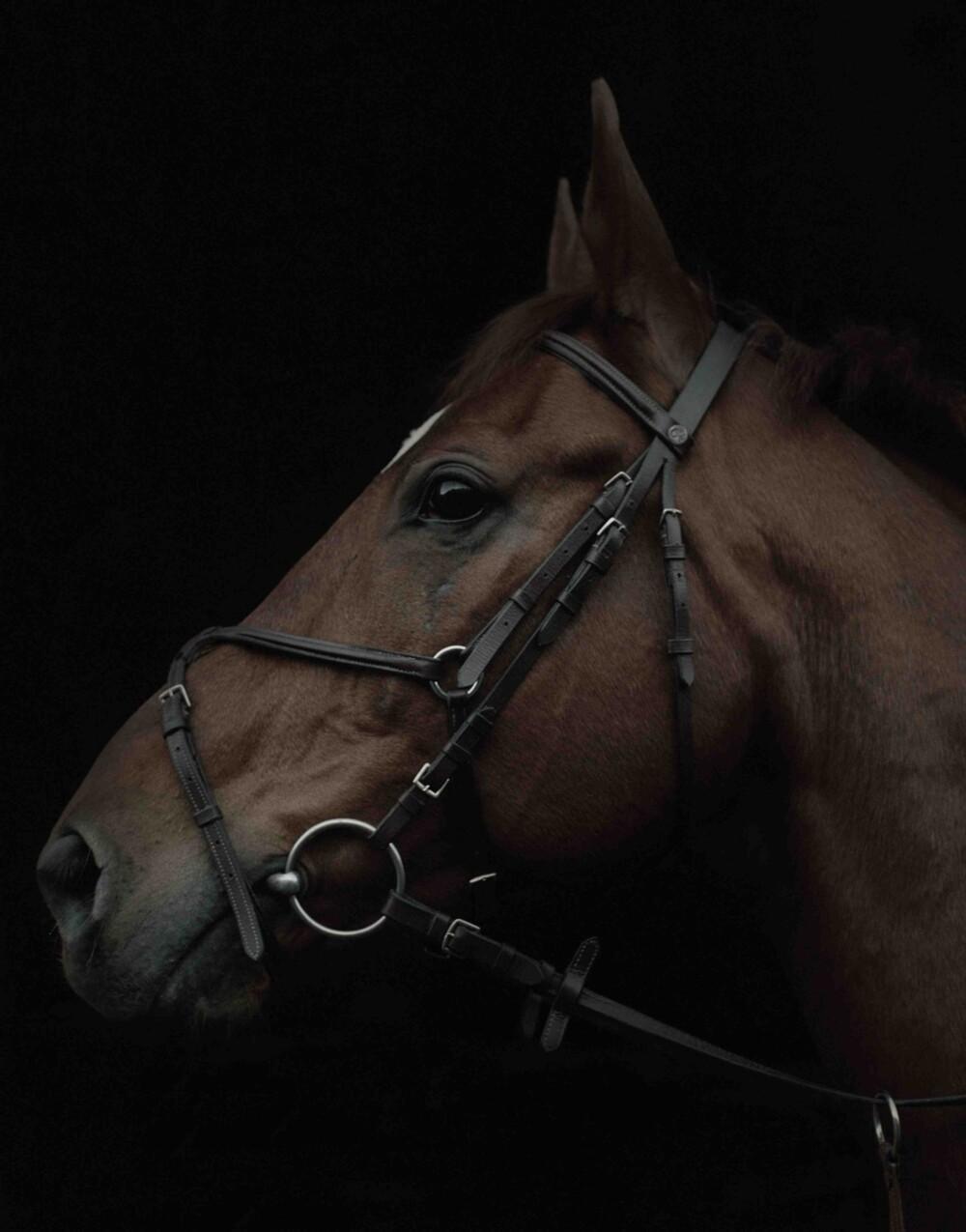 Squint häst